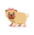 funny pug dog character in pink bow and shoes vector image vector image