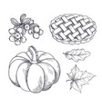 pumpkin and baked pie cranberry sketches vector image vector image