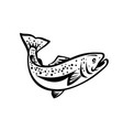 speckled trout spotted seatrout or cynoscion vector image vector image
