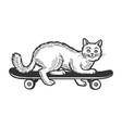 cat on skateboard sketch engraving vector image