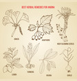 collection of herbs for angina treatment hand vector image vector image