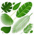 different tropical leaves on white vector image vector image