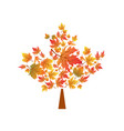 autumn maple leaves symbol vector image vector image