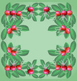 background dogrose vector image vector image