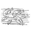 six fish vintage vector image