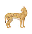 slender serval standing and looking back african vector image vector image