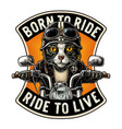 cat driving a motorcycle rides vintage vector image