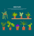 collection of indoor house plants and flowers vector image