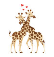 cartoon style of two giraffes vector image vector image