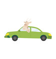 colored kids transport with cute little goat vector image vector image