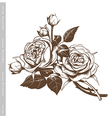 hand sketched vintage bouquet white roses vector image vector image