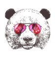 sketch giant panda with sunglasses vector image vector image