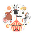 circus animal cute cartoon vector image
