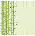 green bamboo with stripe vector image