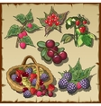 big collection red ripe delicious berries vector image