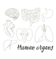 Different human organs set vector image vector image