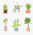 set house plants vector image