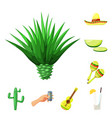 isolated object mexico and tequila symbol vector image