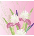 Pink Background with pink irises vector image vector image