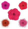 Set of beautiful colorful flowers floral vector image vector image