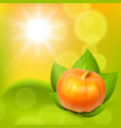 sunny background with pumpkin in leaves vector image vector image