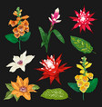 tropical flowers and leaves set exotic floral vector image vector image