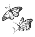 doodle butterfly vector image