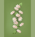 daisy flowers in 3d for greeting cards vector image