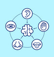 five human senses surrounding brain vector image