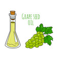 colorful hand drawn grape seed oil bottle vector image vector image