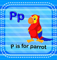 flashcard letter p is for parrot vector image vector image