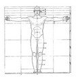 proportions of human figure vintage vector image vector image