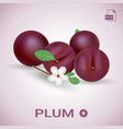 set of fresh ripe plums with leaves and flowers vector image