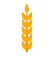 field grain ear wheat harvest farm bread rye vector image