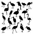set birds vector image