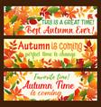 autumn leaf banner fall nature season border set vector image