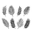 black isolated palm leaves and branches on white vector image vector image