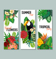 collection of three cards with toucan vector image vector image