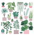 house plants cacti and succulents flower pots vector image
