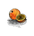 ink drawing orange vector image vector image