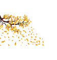 yellow autumn branch of an oak with acorns flying vector image vector image