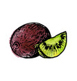 ink drawing kiwi vector image vector image