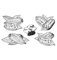 isolated cocoa beans on white background vector image
