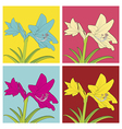 Colorful flowers of Hippeastrum vector image