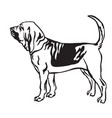 decorative portrait of bloodhound dog vector image vector image