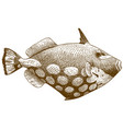 engraving antique clown triggerfish vector image vector image