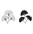 monochrome leaves ginko biloba vector image