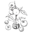 sketch of tomatoes for design vector image