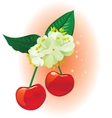 cherry and linden on a star background vector image