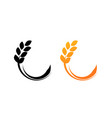 ears of wheat isolated on vector image